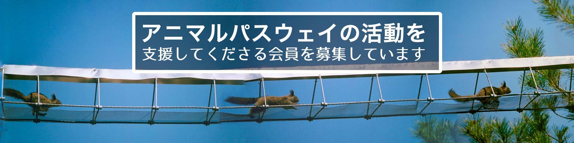 一般社団法人アニマルパスウェイと野生生物の会 | Animal-pathway & Wildlife Association